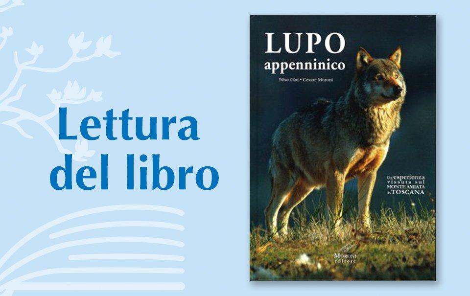 lupo-appenninico-vedizione-premio